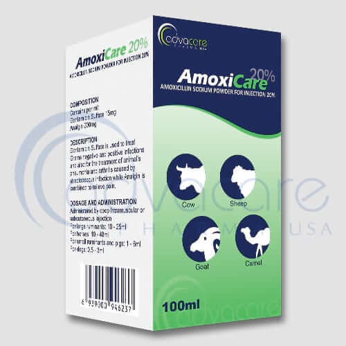 Amoxicillin Sodium Powder for Injection Manufacturer 1