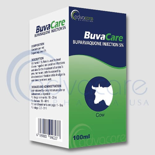 Injection de buparvaquone